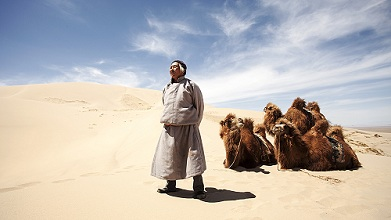 A Mongolian camel herder stands proudly in front of his camels in the middle of the sand dunes of the Gobi Desert. Mongolia, Central Asia, Asia