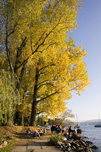 Switzerland Zuerich, Zurich, lake promenade in autumn, people, trees