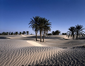 Tunisia, Sahara, Douz, oasis, palm, desert sand *** Local Caption *** 01491565