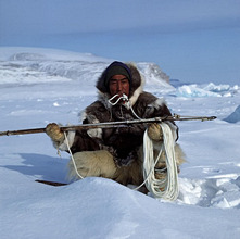 Greenland, coast, Thule, Inuit, harpoon *** Local Caption *** 03131150