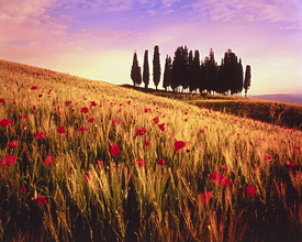 Italy, Tuscany, Val d''Orcia, hill *** Local Caption *** 03751015