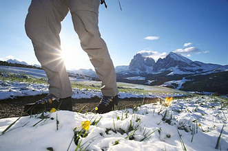 Italy, Dolomites, close to Seiser Alm,Way, hikers, detail, legs, Meadow, flowers, snowMan, hiking, mountaineering, movement, activity, traveling shoes, meadow, flowers, yellow, sunny, is in store background mountain  mountains, Langkofel 3181 m,
