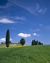 Tuscany, Val d'Orcia, Trees, rise, farmstead, clouded sky,Tuscany
