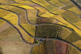 Germany, Rhineland-Palatinate, Mosalee valley, Winningen, vineyards, air reception, autumn,