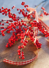 Winter berry branch