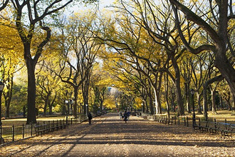 Alley in Central Park in autumn, USA, New York State, New York City