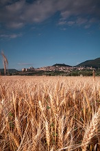 Cityscape from a wheat field  of Assisi, Umbria, Italy, Europe