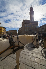 Palazzo Veccho and Signoria square,Florence,Tuscany,Italy, Europe