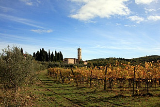Chianti zone, wineyard,Tuscany, Italy