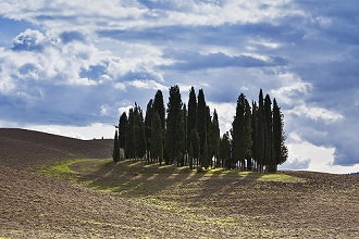 Cypress trees in the countryside, Crete Senesi, Tuscany, Italy, Europe