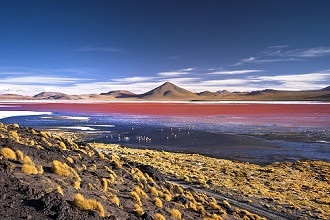 Laguna Colorada, Eduardo Avaroa Andean Fauna National Reserve, South Lipez, Potosì, Uyuni, Bolivia, South America