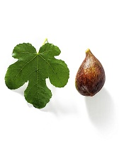 Fig and fig's leaf, Italy, Europe