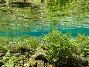 underwater vegetation in a stream, Bondai river, valli Giudicarie, Trentino, Italy, Europe