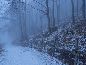 beech wood in the fog, Lessinia, Monti Lessini, Trentino, Italy, Europe