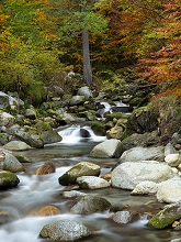 Vallesinella stream in Brenta valley in autumn, Val Rendena, Trentino, Italy, Europe
