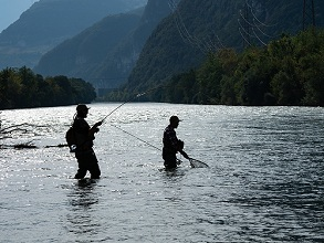 flyfishing in Adige river, Trentino, Italy, Europe