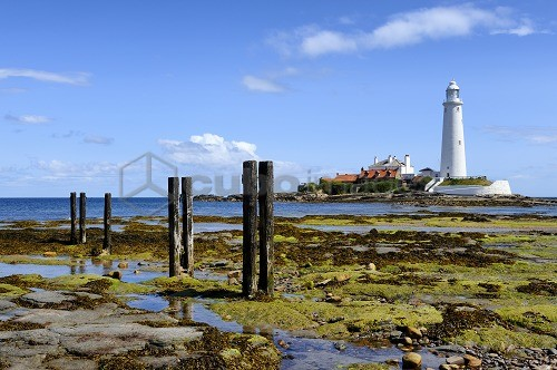 Europe, England, Tyne and Wear, St Mary's Lighthouse