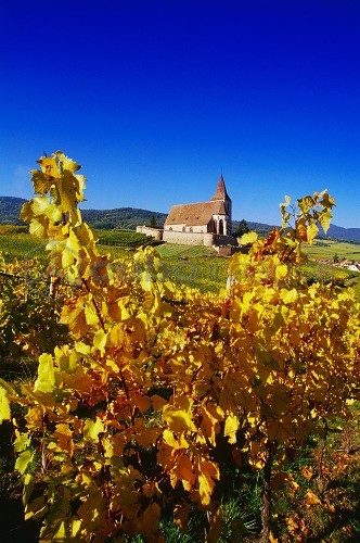 Chapel in the Vineyards near Hunawihr, Elsass, France