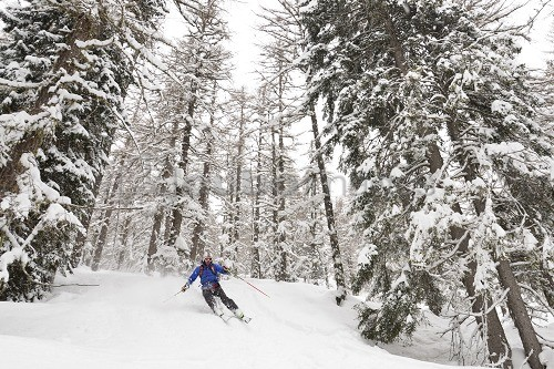 Skier in the woods, Primiero, Valle del Cismón valley, Dolomites, UNESCO, World Heritage Site, Trentino Alto Adige, Italy, Europe