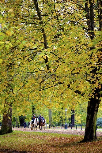 Horses in an autumnal Hyde Park, London, England, United Kingdom, Europe